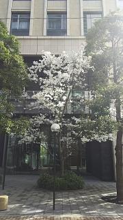 20180324花見(その2)