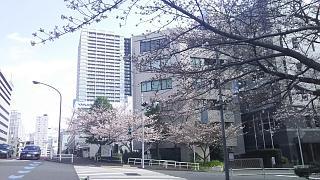 20180324花見(その5)