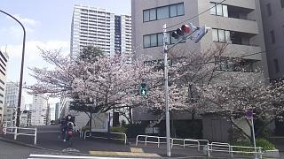 20180324花見(その6)