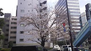 20180324花見(その13)