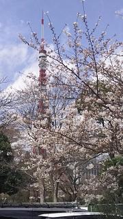 20180324花見(その15)