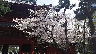 20180324花見(その40)