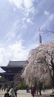20180324花見(その46)