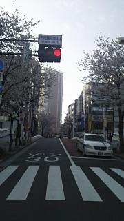 20180327桜(その1)