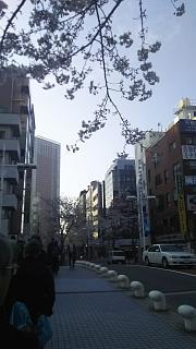20180327桜(その2)