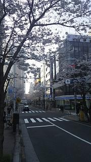 20180327桜(その3)