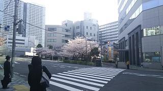 20180327桜(その9)
