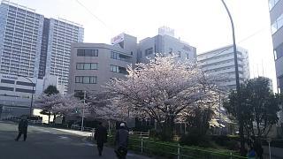 20180327桜(その10)