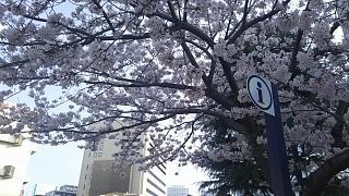 20180327桜(その14)