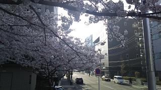 20180327桜(その16)