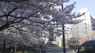 20180327桜(その18)
