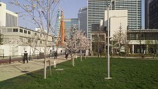 20180329桜(その2)