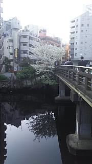 20180329桜(その4)