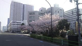20180329桜(その5)