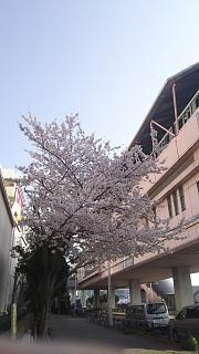 20180329桜(その9)
