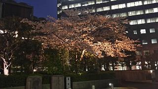 20180329桜(その10)