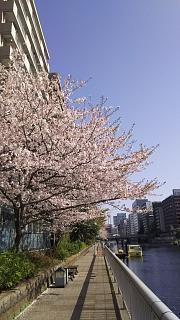20180331桜(その2)