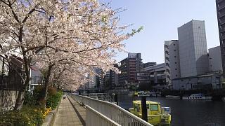 20180331桜(その4)