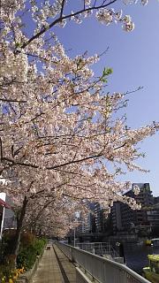 20180331桜(その5)