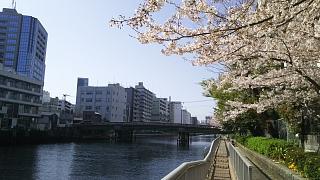20180331桜(その7)