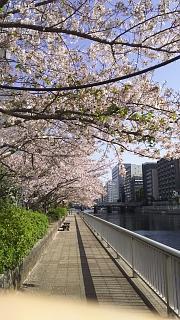 20180331桜(その8)
