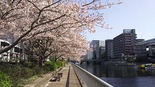20180331桜(その9)