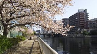 20180331桜(その10)
