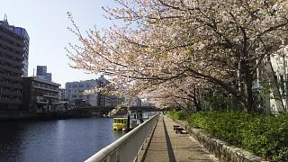20180331桜(その11)