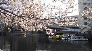 20180331桜(その12)