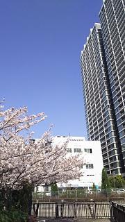 20180331桜(その14)
