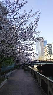 20180331桜(その20)