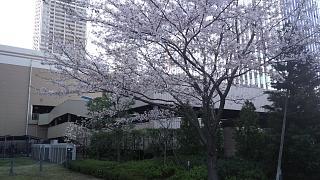 20180331桜(その27)