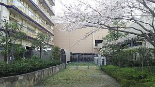 20180331桜(その28)