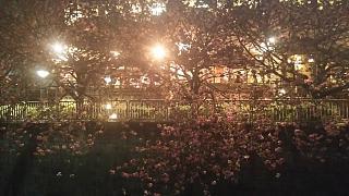 20180404花見(その9)