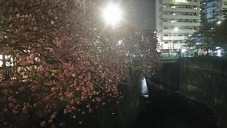 20180404花見(その13)