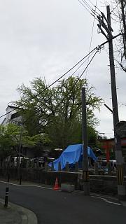 20180409大将軍神社(その2)