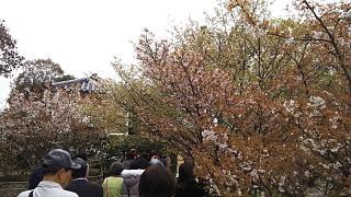 20180409仁和寺(その13)