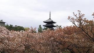 20180409仁和寺(その20)