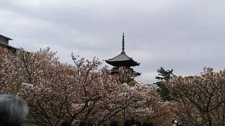20180409仁和寺(その25)