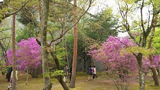 20180409仁和寺(その48)