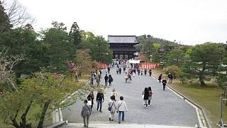 20180409仁和寺(その51)