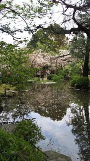 20180409平安神宮(その20)