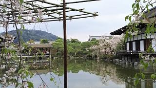 20180409平安神宮(その31)