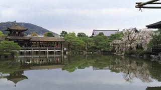 20180409平安神宮(その33)