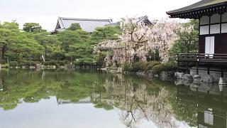 20180409平安神宮(その34)