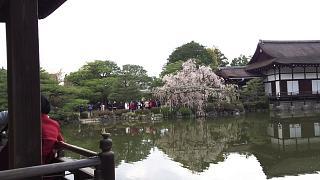 20180409平安神宮(その37)