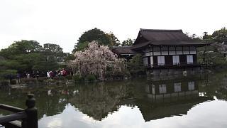 20180409平安神宮(その38)