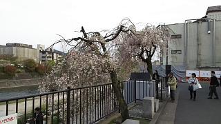20180409京都街歩き(その12)