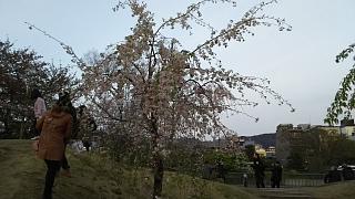 20180409京都街歩き(その22)