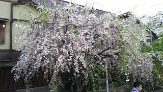 20180409京都街歩き(その24)